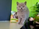 Zdjęcie 2 - Hodowla Fur Cat De La Rancho
