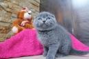 Zdjęcie 10 - Hodowla Fur Cat De La Rancho
