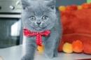 Zdjęcie 11 - Hodowla Fur Cat De La Rancho