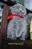Zdjęcie 7 - Hodowla Fur Cat De La Rancho