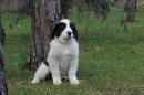 Zdjęcie 15 - Zakątek BERNA - hodowla Berneńskiego Psa Pasterskiego i Landseera