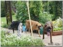 Zdjęcie 6 - Hotel dla zwierząt AZA Mezowo pomorskie