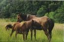 Zdjęcie 2 - YUKON- Koniki z Jagodowego Wzgórza