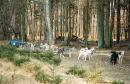 Zdjęcie 1 - YUKON- Koniki z Jagodowego Wzgórza