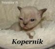 Zdjęcie 9 - Hodowla Torunisko PL