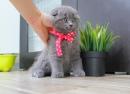 Zdjęcie 4 - Hodowla Fur Cat De La Rancho
