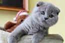 Zdjęcie 13 - Hodowla Fur Cat De La Rancho