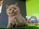 Zdjęcie 1 - Hodowla Fur Cat De La Rancho