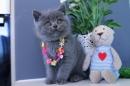Zdjęcie 3 - Hodowla Fur Cat De La Rancho