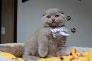 Zdjęcie 6 - Hodowla Fur Cat De La Rancho