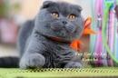 Zdjęcie 9 - Hodowla Fur Cat De La Rancho