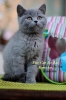 Zdjęcie 12 - Hodowla Fur Cat De La Rancho