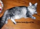 Zdjęcie 12 - Hodowla Sang Royal PL