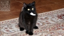 Zdjęcie 7 - SYBERYJSKA AMBA*PL - hodowla kotów SYBERYJSKICH
