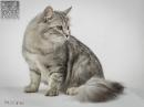 Zdjęcie 17 - SYBERYJSKA AMBA*PL - hodowla kotów SYBERYJSKICH