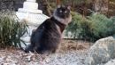 Zdjęcie 15 - SYBERYJSKA AMBA*PL - hodowla kotów SYBERYJSKICH
