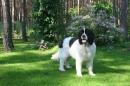 Zdjęcie 20 - Zakątek BERNA - hodowla Berneńskiego Psa Pasterskiego i Landseera