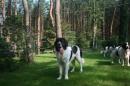 Zdjęcie 6 - Zakątek BERNA - hodowla Berneńskiego Psa Pasterskiego i Landseera